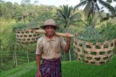 Bali and the Balinese